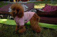 > Dog exibicion 2010 -