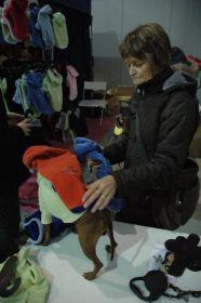 > Mezinárodní výstava psů Praha 2008 -