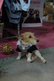 > Internationale Hundeausstellung Prag 2008 -