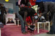 > Mezinárodní výstava psů Praha 2009 - šátek námořník