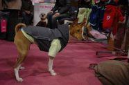 > Mezinárodní výstava psů Praha 2009 - Pláštěnka Wandale s mikinkou Bublina s kostí